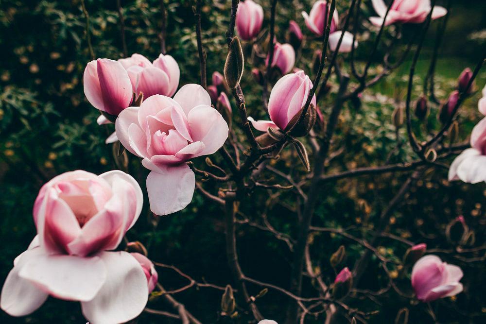 flowers-1000x667